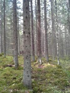 wpid-metsä.jpg.jpeg